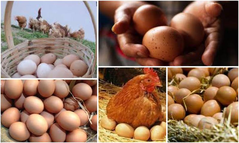 Sağlıklı Hayat İçin Organik Yumurta