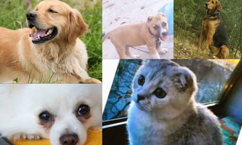 Evde Kedi Beslemek İsteyenlerin Uyması Gereken Kanunlar